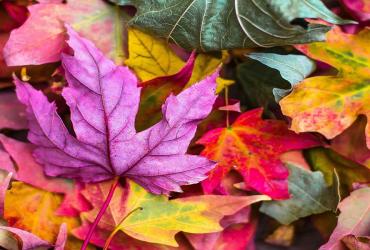 L'automne, la saison des couleurs !