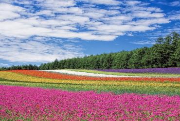La saison des fleurs